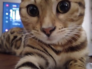 Videos from freeasiantubes.com