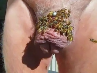 much wasp on load of shit